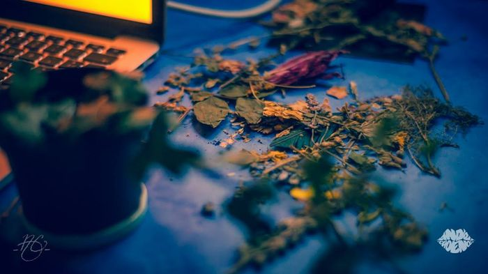 Dried leaves on a table near a laptop, all under moody lighting